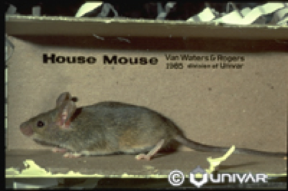 Rodent Control Citrus Heights CA: Rats & Mice | Parish Pest Mgmt - HouseMouse