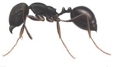 Ant Removal Services Citrus Heights CA | Parish Termite & Pest Mgmt - PavementAnt