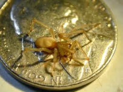 Spider & Insect Control Citrus Heights CA | Parish Termite & Pest Mgmt - SpiderYellowSac
