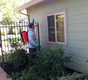 Home Pest & Termite Control Services Citrus Heights CA | Parish - p2